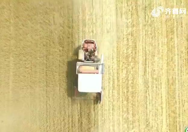 东营村民自办大规模家庭农场 机械化麦收带活全村发展