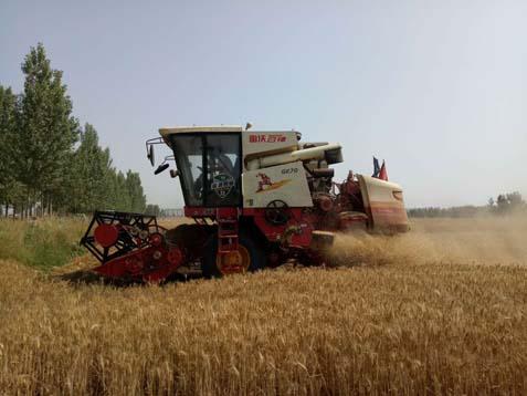 嘉祥县夏收夏种基本结束 67万亩小麦收割完毕