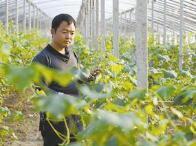 山东公布2017年度新型职业农民优秀典型