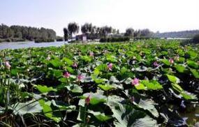 速围观!亚洲最大的人工湿地将举办首届临沂红荷节