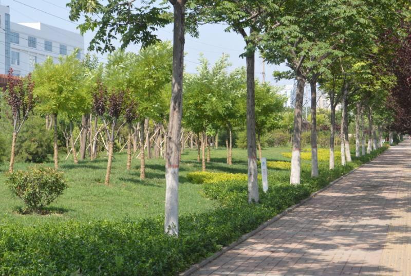 淄博高新区投资1000万元治理裸露土地 大力提升道路绿化水平