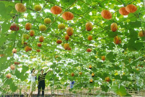 山东2018年农业(种植业)主推优质绿色高效技术模式