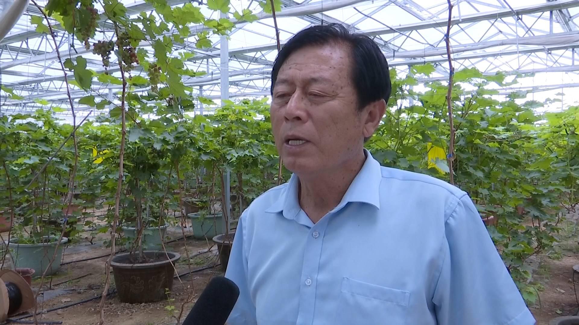 总书记来到我们身边|平度仁兆镇沙北头村王桂欣:千方百计增加农民收入