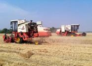 """丰收493.23万亩!潍坊三夏小麦收获工作""""告捷"""""""