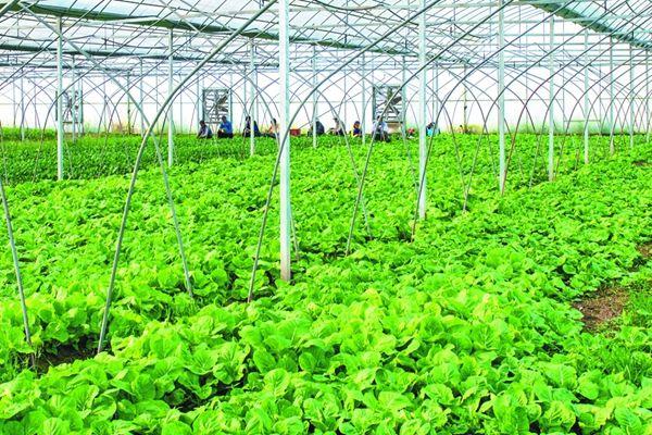 2018年山东力推绿色循环高效农业项目 每个项目中央财补约2000万元