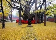 这棵3700岁古树荣登中国最美古树榜首 山东还有这些古树群