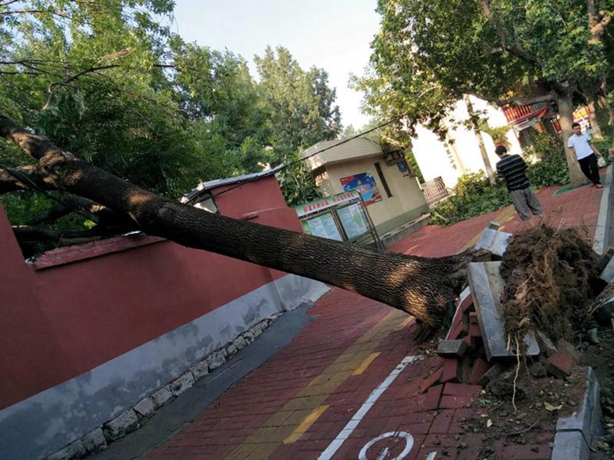 多图:昨夜狂风暴雨突袭济南!大树被刮断 多车被砸