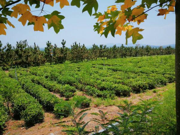林水会战看日照丨坚持生态产品产业融合发展 全面助力乡村振兴