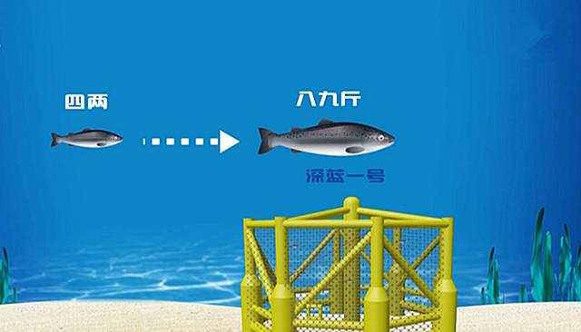 """109秒动画独家揭秘""""深蓝1号""""网箱如何养殖三文鱼?"""