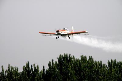 7月10日起冠县将实施飞机防治美国白蛾 这些注意事项你需要了解