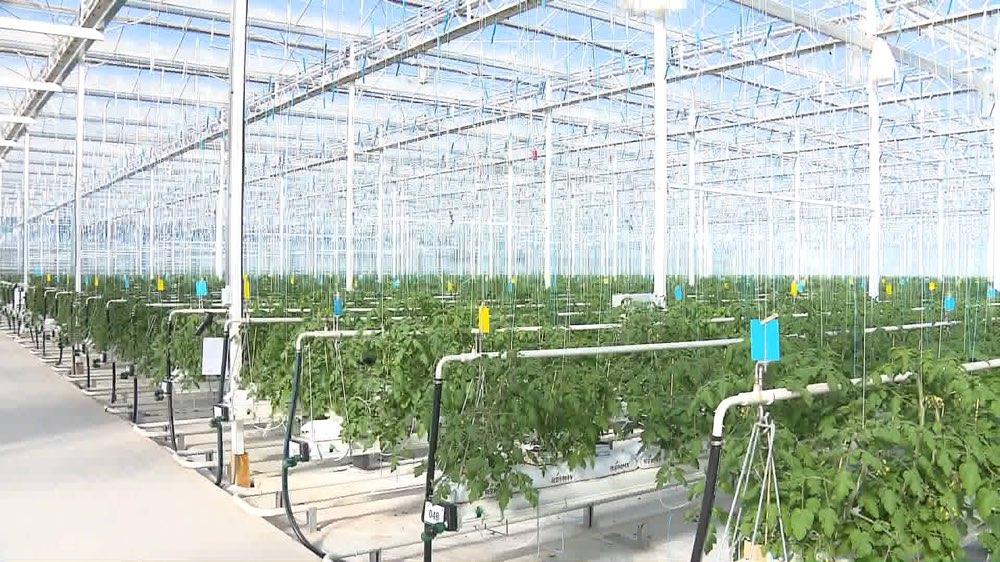 山东提高促农产品、食品药品优质供给 培育70项国家标准