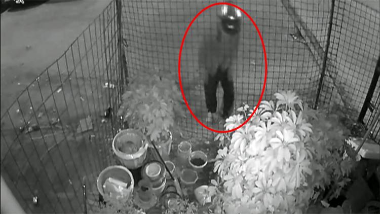 46秒|戴头盔盗窃被监控记录 男子偷花被拘8天