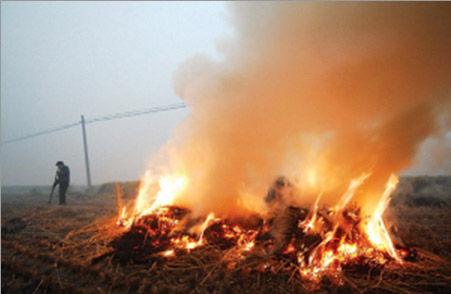 图省事闯大祸!平邑一男子焚烧秸秆致50余亩林地被烧