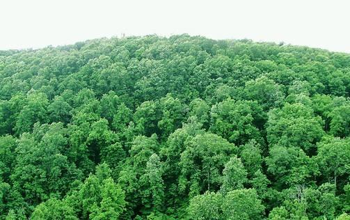 2018年下半年山东省林业有害生物预测增加发生面积260万亩