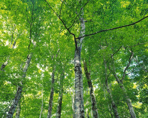 山东2018年上半年主要林业有害生物发生面积477万亩,同比上升6.07%
