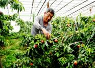 新增10家!潍坊公布2018年农民林业专业合作社市级示范社名单