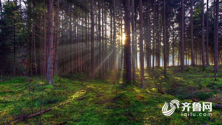 树林.jpg