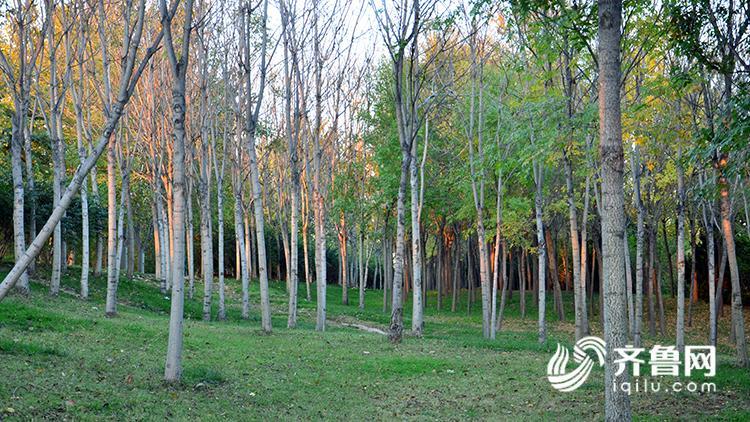 树林1.jpg
