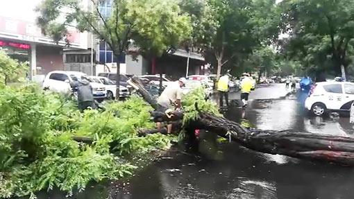 20秒丨暴雨大风袭城大树被刮倒,德州交警城管紧急处理