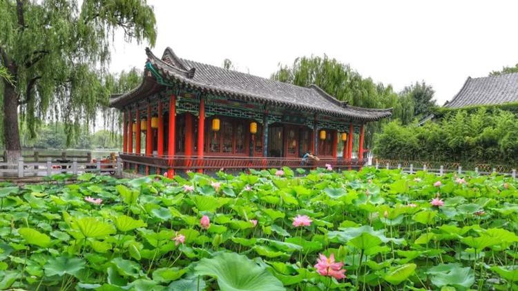 16秒丨济南市第32届荷花艺术节开幕,百亩荷田迎风吐艳