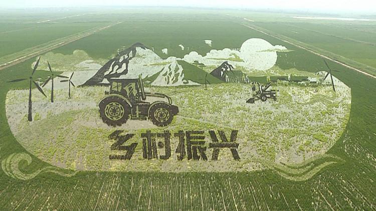 黄河入海、乡村振兴…37秒视频带你欣赏九色稻田画