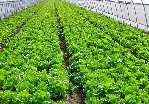 到2022年,山东将创建示范农业产业化联合体1000个