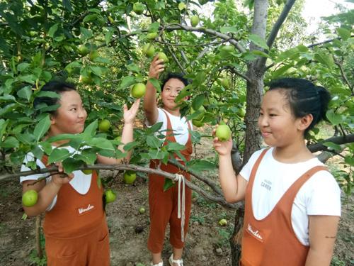 阳信1.5万亩早熟梨上市 品种达20多个
