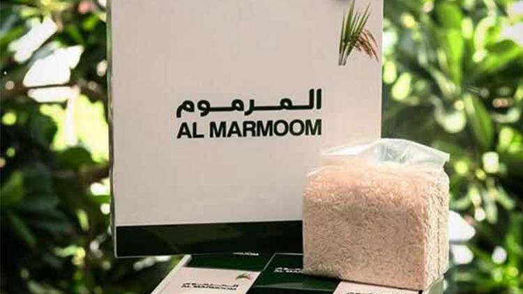 袁隆平团队迪拜沙漠海水稻获成功  将在中东及北非地区推广