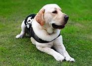 德州市区集中整治违规养犬,这些犬种不能养!