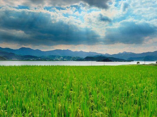 山东推进农业绿色发展 2020年粮食综合生产能力达5000万吨