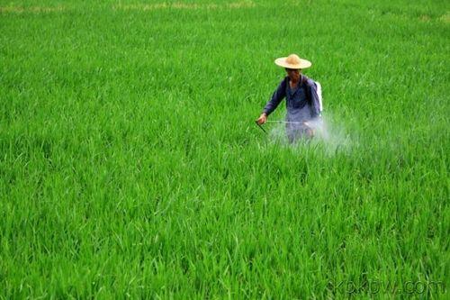 山东开展打击非法制售使用假劣和禁限用农药专项行动