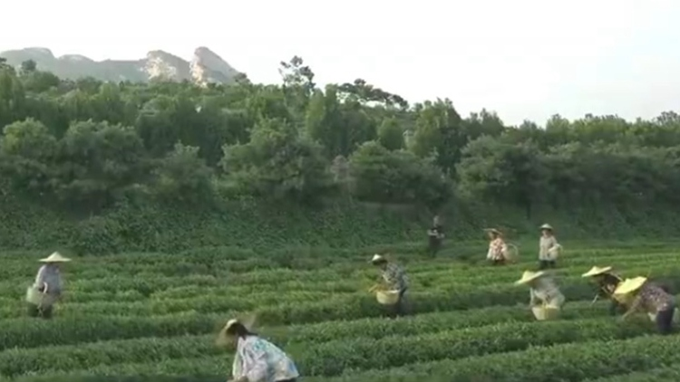 山东:开展新时代文明实践 助推乡村振兴