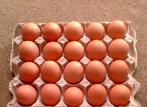 淄博公布一批食品抽检信息 鲜鸡蛋中检出兽药氟苯尼考