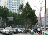 潍坊潍州路今日试通车 这3条公交线路恢复原线运行