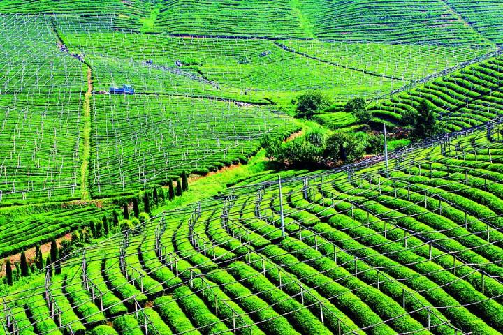 招远、昌邑和日照岚山获批实施绿色高效特色农业项目