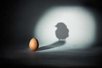 世界观丨禁止公鸡清晨打鸣吵醒市民!美国纳舒厄市计划为鸡立法