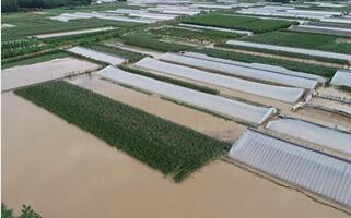 台风致临沂9县区受灾 直接经济损失达1.9亿元