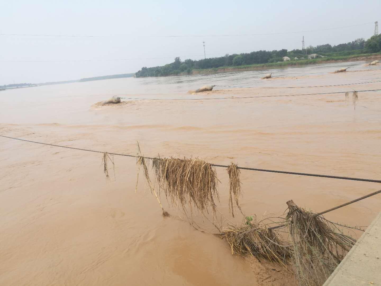 黄河山东段再迎2000m³/s以上水流量过境 济南泺口浮桥拆除