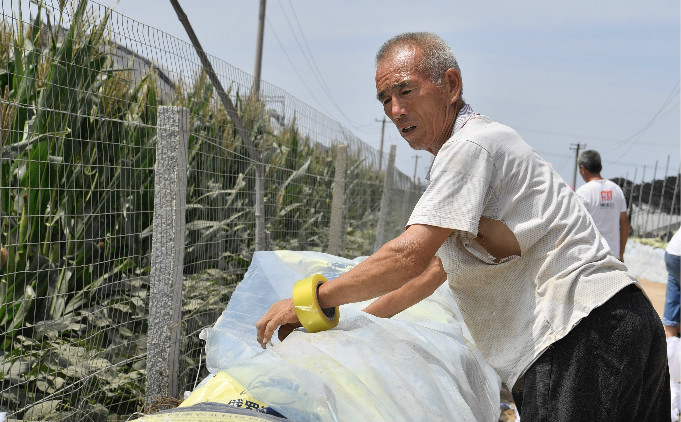 """直击寿光救灾丨62岁村民:""""保住棚,这是所有的希望"""""""