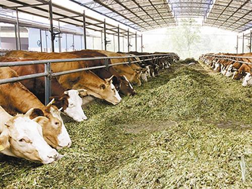国家级牛肉加工技术研发中心落户滨州阳信