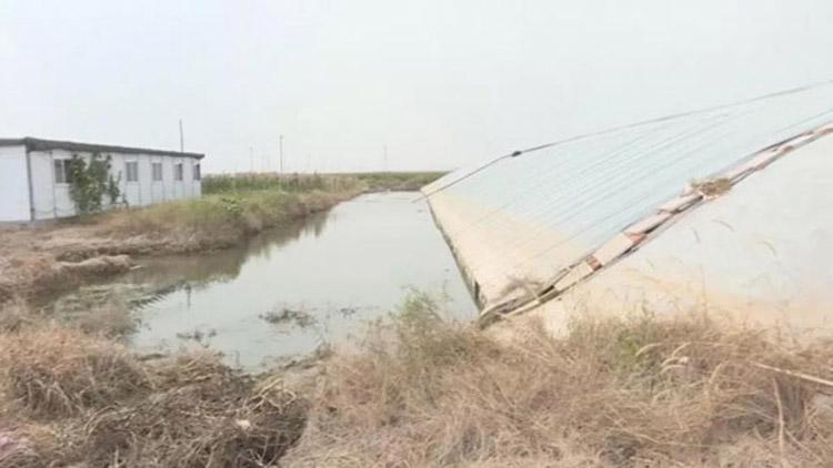 寿光:暴雨来临村支书带领村民筑坝 自家24个蔬菜大棚却被淹