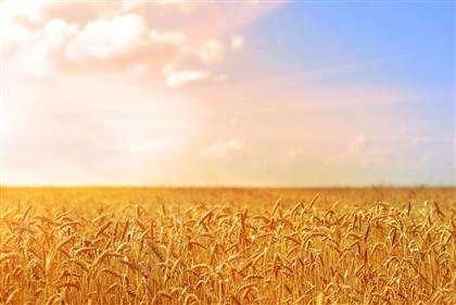 山东将开展设施农业项目用地清理整治专项行动 历时三个月