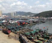黄渤海将开渔:山东将实施出海作业渔船夜间点名制度