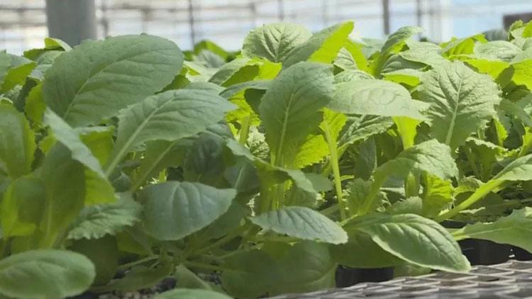 寿光农业局发农资捐赠倡议书,8天时间53家企业捐2600万粒种子!