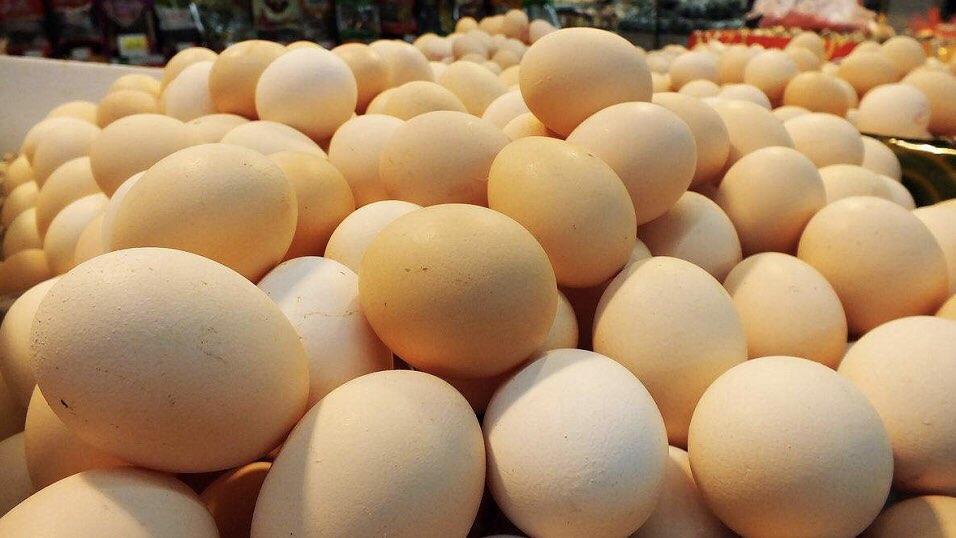 山东鸡蛋价格创2015年以来新高 9月有望下行