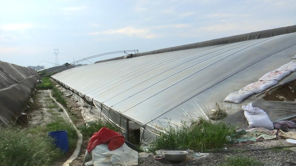 山东制定蔬菜地水灾后补救措施 帮助尽快恢复生产