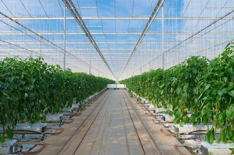 山东出台加快全省智慧农业发展四个意见 2022年实现目标