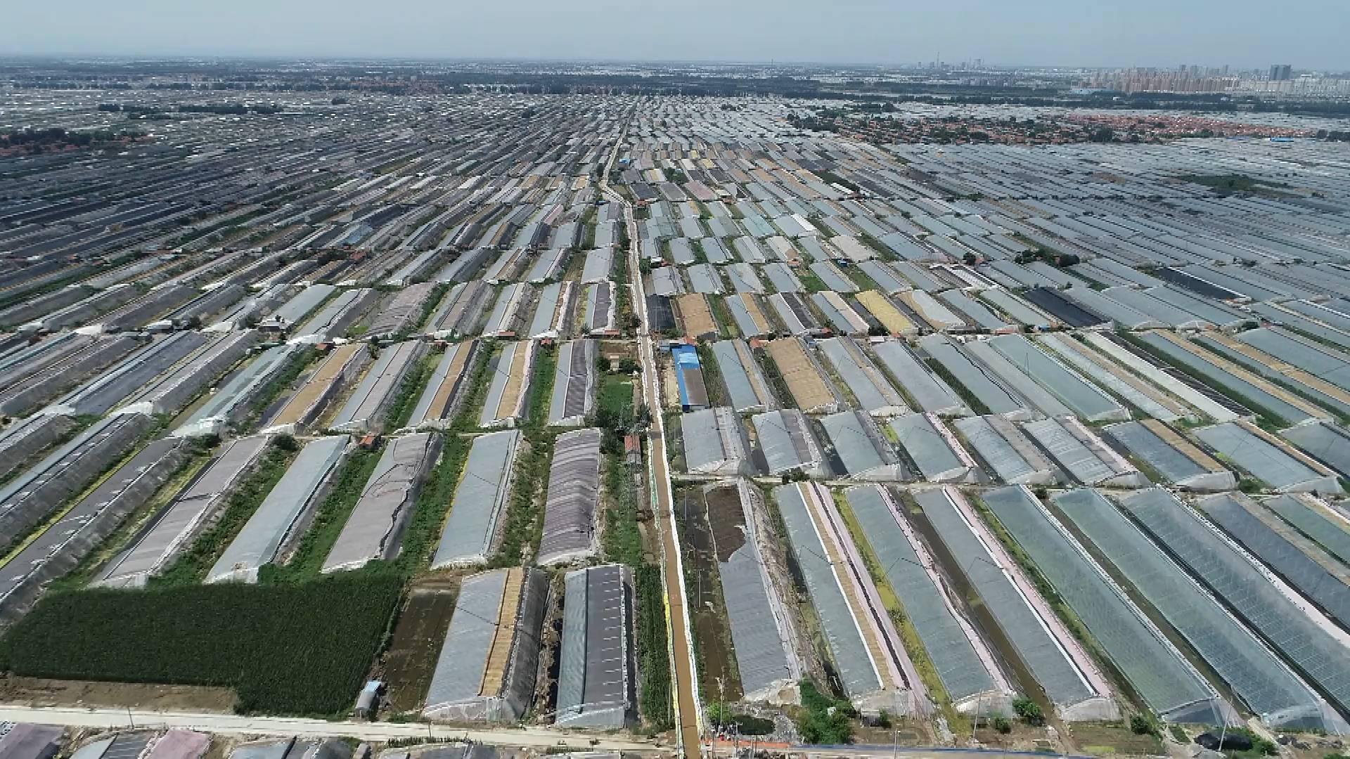 120秒丨潍坊12万亩受灾大棚明水全部排完