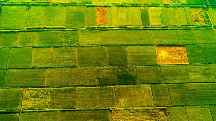 晒·秋 | 槐荫吴家堡万亩稻田连方成片 青黄相间丰收在望