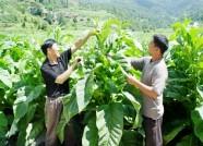 """种业产值达24亿元 潍坊""""品质农业""""建设取得这些新成绩"""